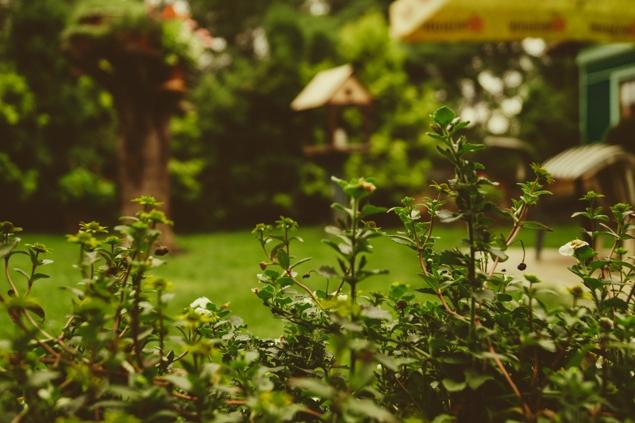Hogar y Jardin